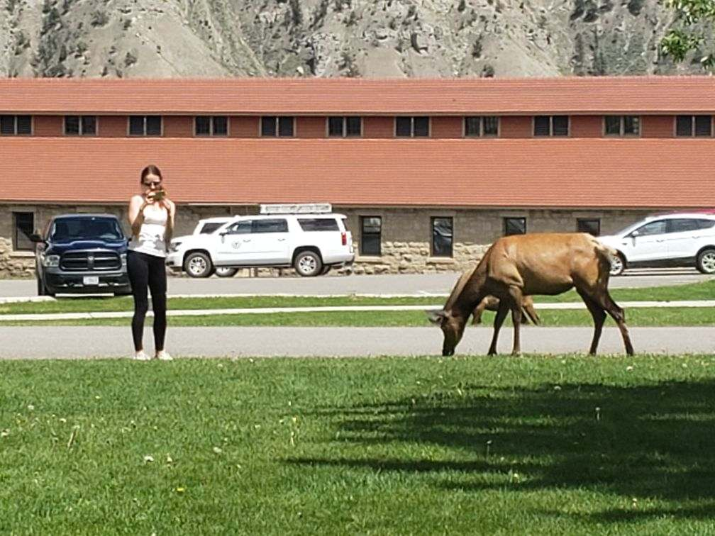 Person standing too close to an elk.