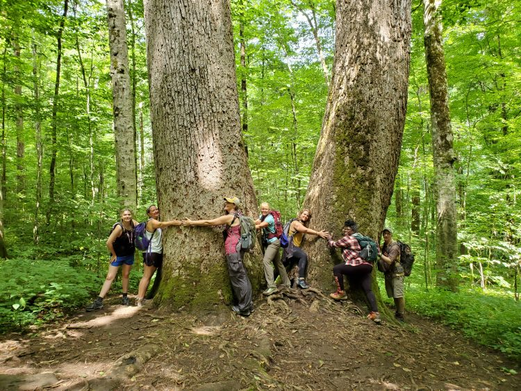 Group of people circling large trees with their arms