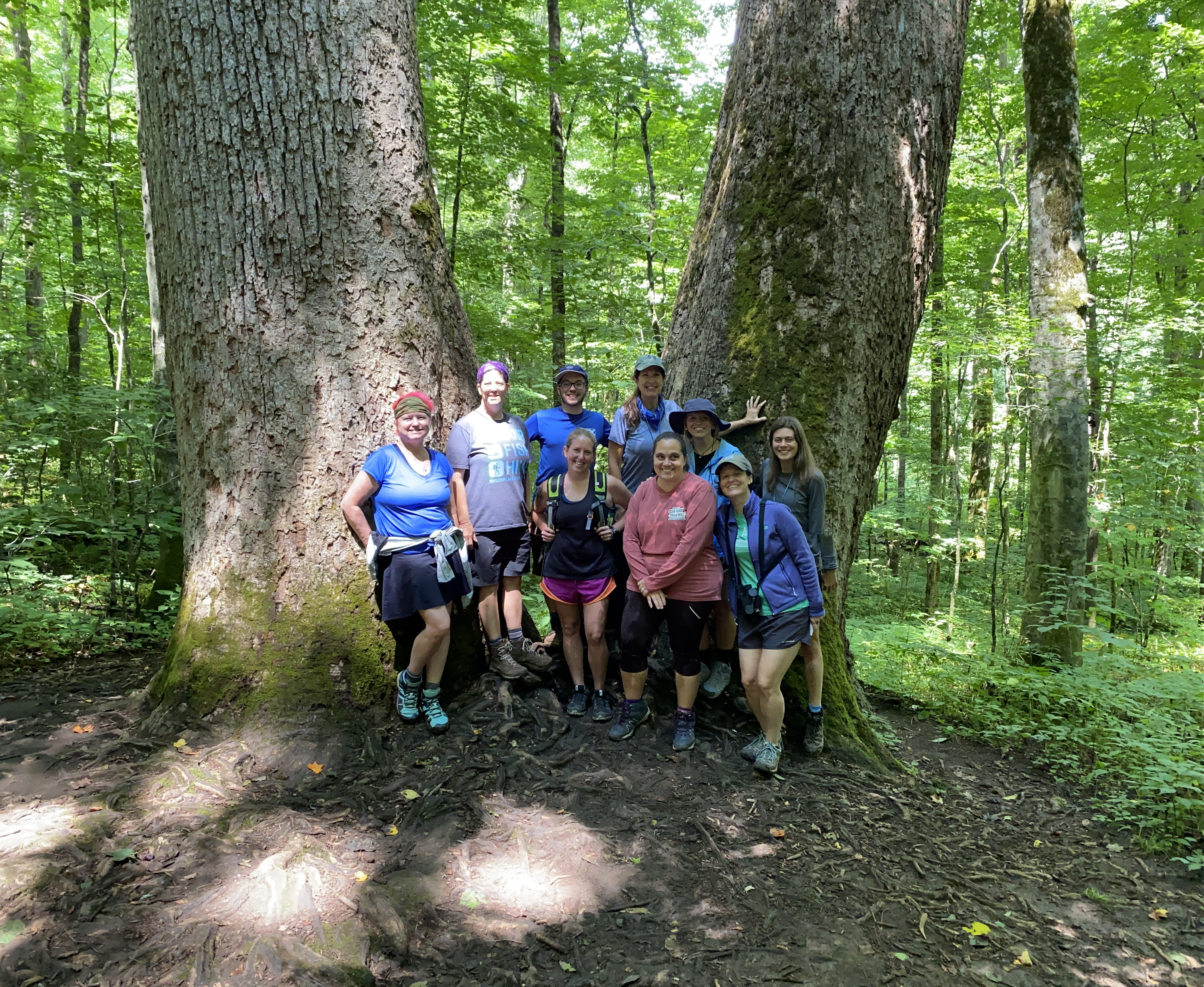 Nine people standing in front of a huge double trunked tulip poplar tree